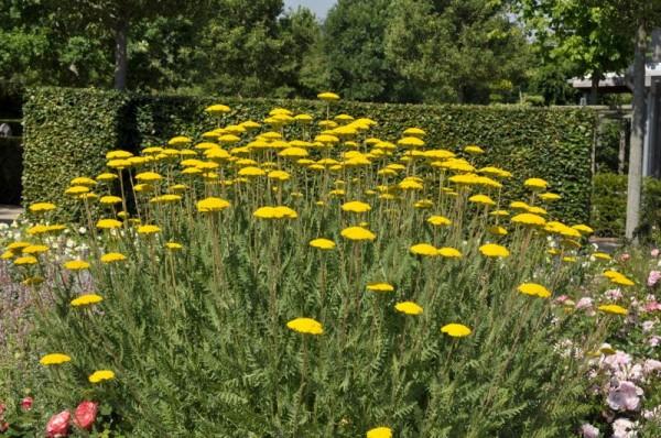 Hohe Garten-Gold-Garbe-1
