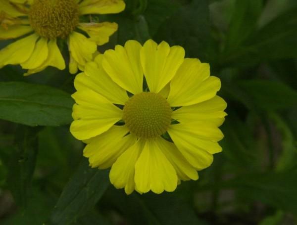 Garten-Sonnenbraut-1