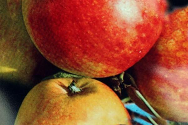 Apfel 'James Grieve' mittel-1