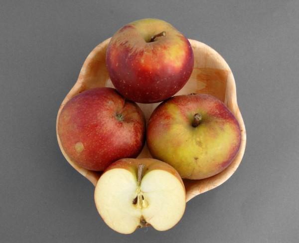 Apfel 'Boskoop' spät-1